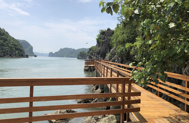 The whole island walkway system is made of wood and avoids harm to the ecosystem on the island.
