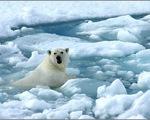 Trái đất nóng lên: Lỗi của con người
