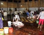 Hải Phòng: Lò giết mổ gia súc tra tấn người dân