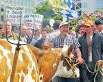 Nông dân châu Âu phản đối Hiệp định Thương mại tự do với Mỹ