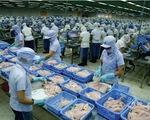 DN xuất khẩu cá tra Việt gặp khó trong điều kiện mới
