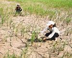 Nguy cơ khô hạn tại miền Trung - Tây Nguyên