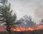 Quảng Bình: Cháy 10ha rừng phi lao