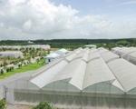 Cả nước sẽ có 10 khu nông nghiệp ứng dụng công nghệ cao