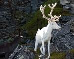 Những con vật lạc loài nổi bật giữa thiên nhiên