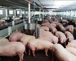 Tăng cường kiểm soát chất cấm trong chăn nuôi tại 6 tỉnh Nam Bộ
