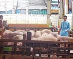 Báo động gia tăng hàm lượng chất cấm trong thịt heo