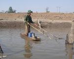 ĐBSCL: Người dân thất thu thủy sản trong mùa lũ