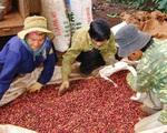 Nông nghiệp 6 tháng đầu năm: Khó cả xuất khẩu lẫn nhập khẩu