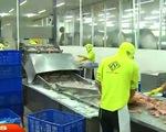 Nghịch lý giá cá tra xuất khẩu rẻ hơn trong nước