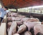 Tiền Giang: Xử phạt 12 hộ chăn nuôi sử dụng chất cấm