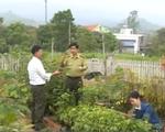 Quảng Ninh: Bảo tồn tại chỗ thành công nhiều cây dược liệu quý