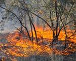 Cháy rừng tại Mỹ, 400 gia đình phải sơ tán