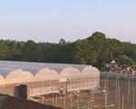 Đầu tư vào nông nghiệp công nghệ cao: Dễ hay khó?