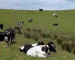 TPP mang lại thay đổi trái ngược cho ngành sữa New Zealand và Canada