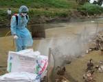 Sơn La công bố dịch cúm gia cầm H5N6