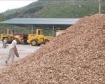 Dăm gỗ xuất khẩu không bắt buộc kiểm dịch