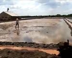 Bà Rịa - Vũng Tàu: Hàng trăm ha đất bị nhiễm mặn