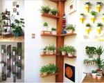 Trang trí không gian sống với cây xanh nội thất