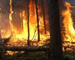 Cháy rừng ở California: Cuộc sống của 6.000 hộ dân bị đe dọa