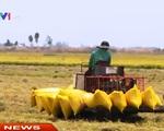Thương hiệu gạo quốc gia - Điểm mấu chốt trong tái cơ cấu ngành lúa