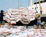 Rất khó dự kiến lượng gạo xuất khẩu năm 2015
