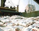 Trúng thầu xuất khẩu, giá gạo vẫn giảm mạnh