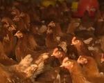 Chăn nuôi gia cầm: Sức ép cạnh tranh ngày càng lớn