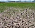 Hạn hán ở Tây Nguyên ngày càng khốc liệt