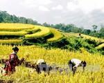 Từ 24/9, bắt đầu Tuần Văn hóa du lịch ruộng bậc thang Hoàng Su Phì