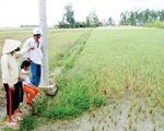 ĐBSCL: Xâm nhập mặn khiến hàng trăm hộ nông dân lao đao