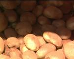 Góc khuất sau việc phù phép khoai tây Trung Quốc thành khoai Đà Lạt