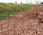 Nông dân Ninh Thuận nỗ lực chống hạn