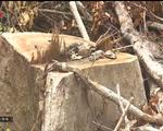Phú Yên: Tình trạng phá rừng phòng hộ diễn biến phức tạp