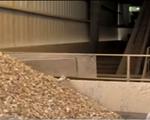 Sản lượng sắn lát khô xuất khẩu Việt Nam đạt 1,5 triệu tấn