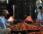 Xuất khẩu nông sản đạt gần 17 tỷ USD