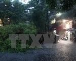 Thái Nguyên: Mưa to kèm theo gió lốc khiến cây đổ, một người dân tử vong