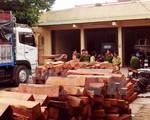 Đồng Nai: Bắt vụ vận chuyển hàng chục m3 gỗ lậu