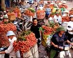 Nhiều biện pháp hỗ trợ nông dân tiêu thụ vải thiều