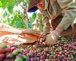 Xuất khẩu nông, lâm, thuỷ sản 10 tháng đạt gần 25 tỷ USD