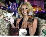 Britney Spears chi 8 triệu USD cho… chó, massage