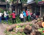 Tích cực xử lý cây lớn gãy đổ ngổn ngang sau bão số 1 ở Hà Nội
