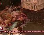 Ám ảnh những lò mổ gia cầm siêu bẩn