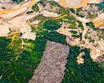 Peru: Khai thác vàng trái phép tàn phá nặng nề rừng mưa Amazon