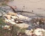 Kinh hãi vỏ bao bì thuốc BVTV tràn lan ngay cạnh nhà máy nước sinh hoạt