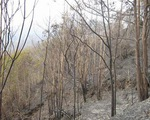 Cảnh báo cháy rừng cấp cực kỳ nguy hiểm