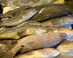 Hà Tĩnh hỗ trợ 5 triệu đồng cho điểm kinh doanh hải sản bị ảnh hưởng bởi cá chết