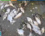Bình Phước: Cá chết nổi trắng trên thượng nguồn sông Sài Gòn