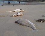 Bộ TN-MT khảo sát vùng biển Hà Tĩnh: Đã lấy mẫu xung quanh đường ống xả thải của Formosa