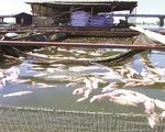 Đồng Nai: Sông La Ngà ô nhiễm, người dân kéo bè ngược sông cứu cá